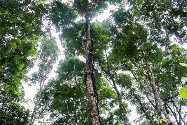 Mua bán khí carbon - Cú hích thúc đẩy bảo vệ rừng, phát triển kinh tế bền vững - Ảnh 1.
