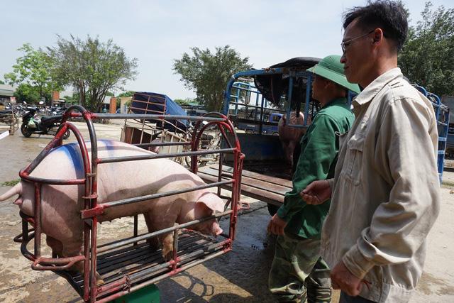 """Lợn hơi tiếp tục tăng giá, tiểu thương chấp nhận """"đạp giá đẩy hàng"""" - ảnh 1"""