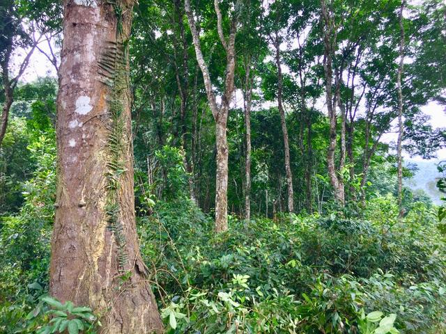 Việt Nam có thể bán 57 triệu tín chỉ carbon ra thế giới mỗi năm - ảnh 1