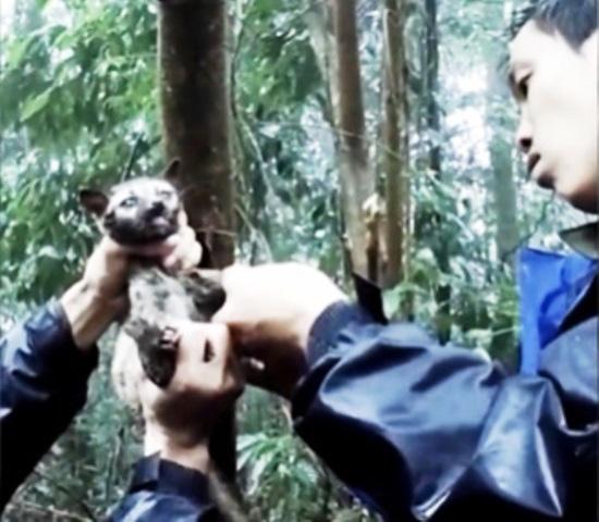 Bảo vệ động vật hoang dã: Cần thêm chế tài mạnh hơn - Ảnh 3.
