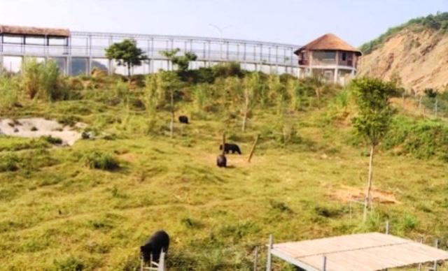 Bảo vệ động vật hoang dã: Cần thêm chế tài mạnh hơn - Ảnh 5.