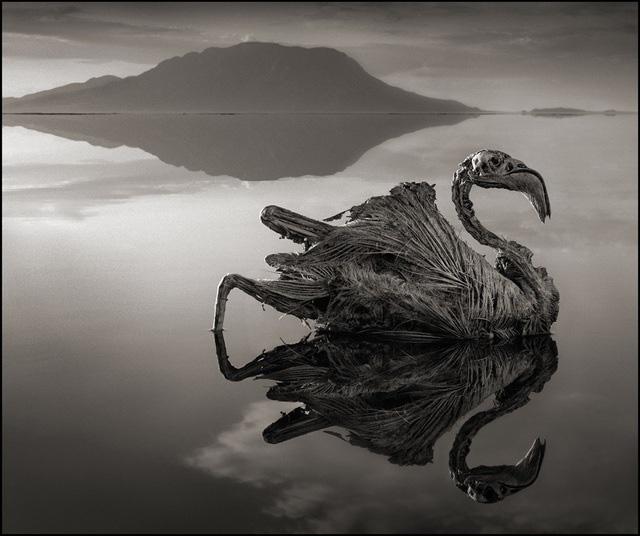 Những bí ẩn ở vùng nước tử thần nơi sinh vật vô tình sảy chân sẽ hóa đá - Ảnh 2.