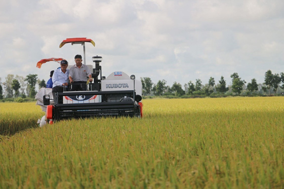 60 tấn gạo Việt đầu tiên nhập khẩu vào Anh theo UKVFTA - Ảnh 1.