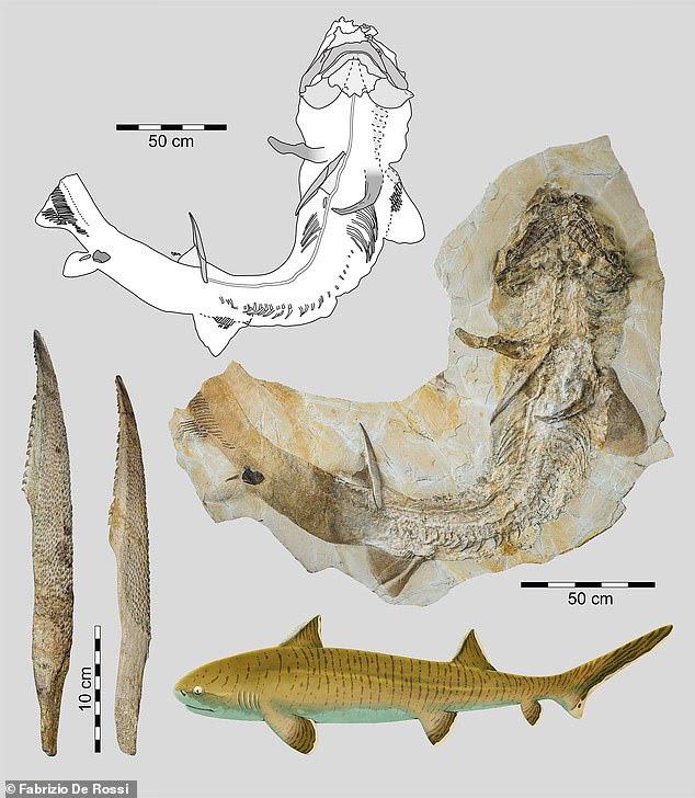 Hóa thạch cá mập 150 triệu năm hé lộ về quá khứ của Trái Đất - ảnh 3