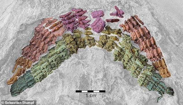Hóa thạch cá mập 150 triệu năm hé lộ về quá khứ của Trái Đất - ảnh 4