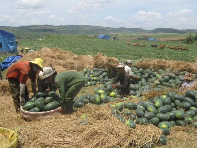 Quy định mới về nông sản Việt Nam vào Trung Quốc - ảnh 3