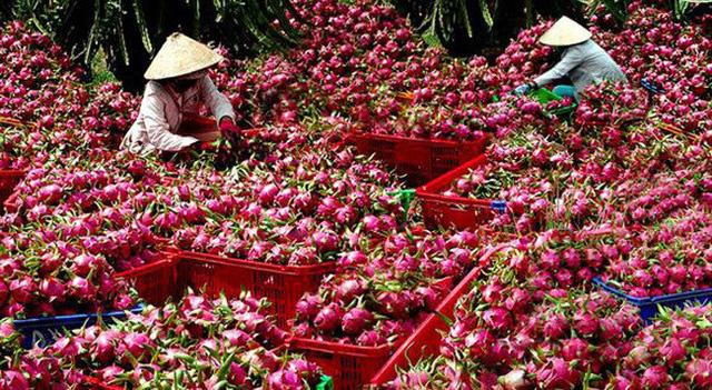 Quy định mới về nông sản Việt Nam vào Trung Quốc - ảnh 1