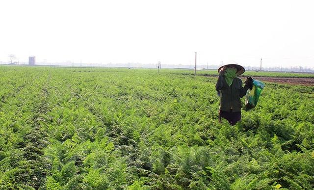 Nông sản vùng dịch: Cần giải cứu bài bản, khoa học - Ảnh 1.