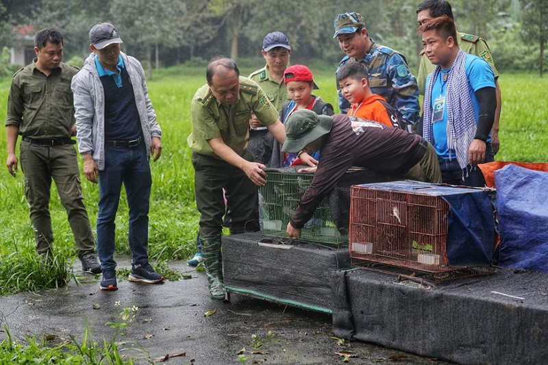 Cuc Phuong National Parks activity of releasing the rescued wildlife back to nature is introduced for the first time. Photo: VNA