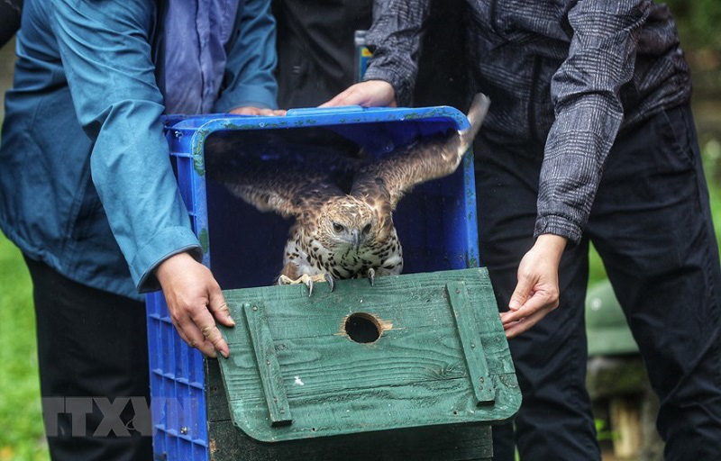 The moment which a wild animal is released to the nature will bring a positive feeling to people. Photo: VNA.