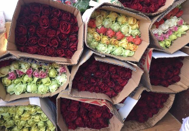 Giá hoa hồng Đà Lạt tăng vọt dịp 8/3 - Ảnh 1.