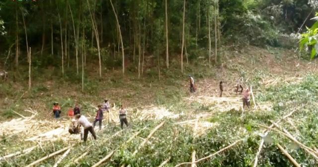 Phức tạp tình trạng phá rừng chiếm đất sản xuất - Ảnh 2.