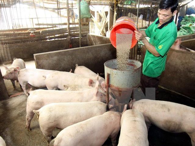 Giá thức ăn chăn nuôi tăng mạnh - Ảnh 1.