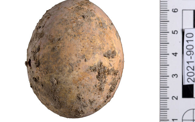 Israel phát hiện quả trứng gà 1.000 năm tuổi còn nguyên vẹn - ảnh 1