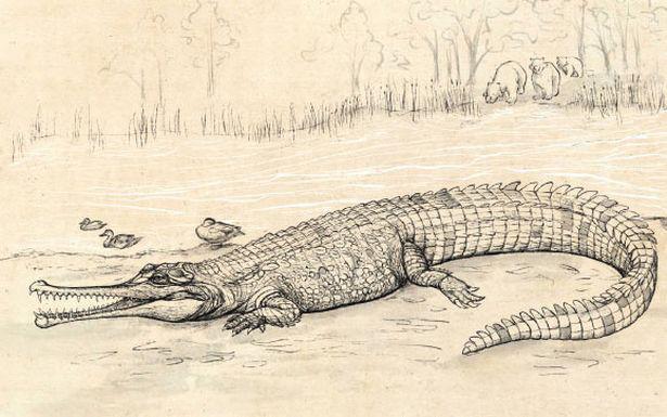 Cá sấu tiền sử khủng dài tới 7 m từng sống tại Australia - ảnh 1