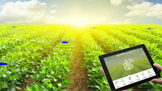 """Digital transformation - the """"key"""" for agricultural products to sell at high prices - Photo 1."""