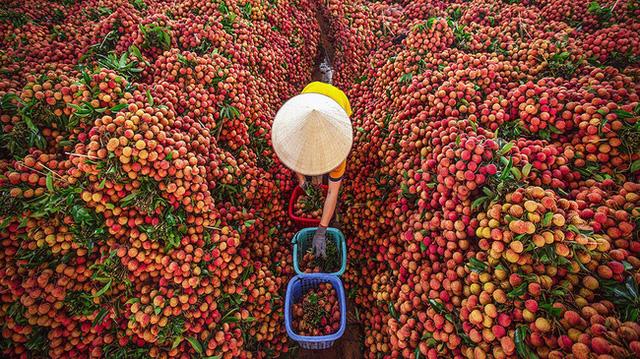 Tiêu thụ nông sản qua thương mại điện tử: Chủ động để không phải giải cứu - Ảnh 1.