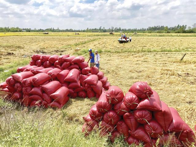 Bộ NN-PTNT đề xuất thu mua dự trữ lúa gạo quốc gia - Ảnh 1.