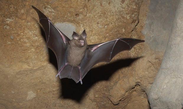 Động vật thay đổi hình dạng để ứng phó với khủng hoảng khí hậu - ảnh 2