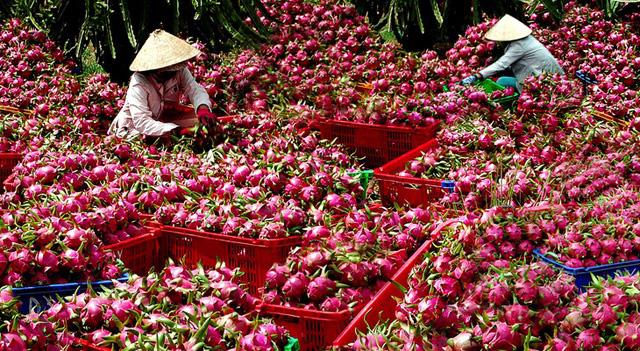 Thúc đẩy xuất khẩu hàng nông sản sang thị trường Trung Quốc - Ảnh 1.