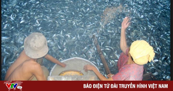Đề án ba cấp về liên kết nâng cao chất lượng giống cá tra ở ĐBSCL