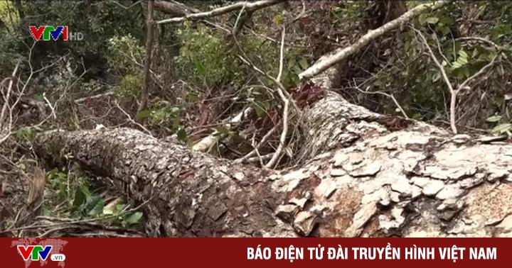Khó ngăn chặn tình trạng chặt phá rừng trái phép