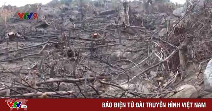 Bình Định: Phát hiện hàng chục ha rừng phòng hộ bị
