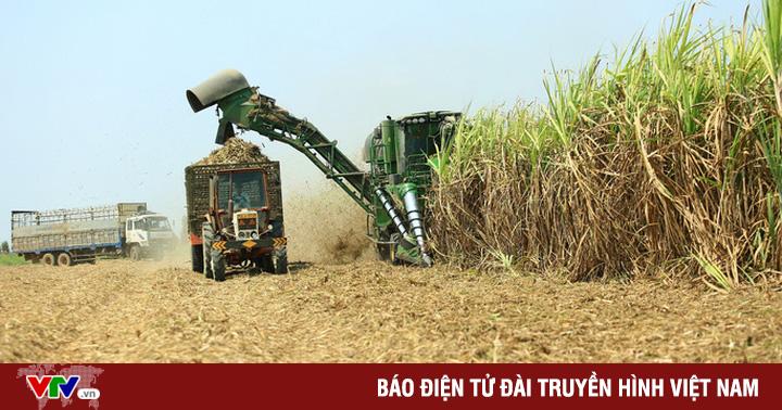 Không còn đường lùi cho ngành mía đường Việt Nam