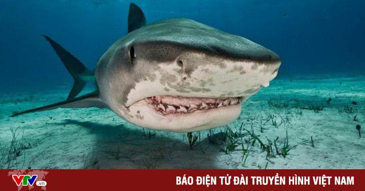 Phát hiện bàn tay đeo nhẫn của du khách mất tích trong bụng cá mập