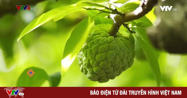Khám phá vựa trái ngọt Mai Sơn, Sơn La
