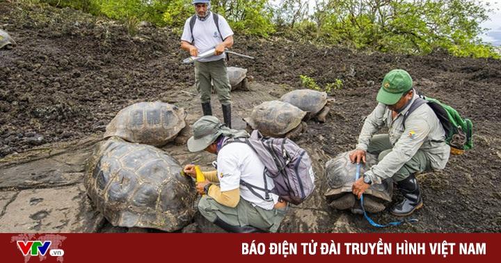 Phát hiện 2 loài rùa tưởng đã tuyệt chủng