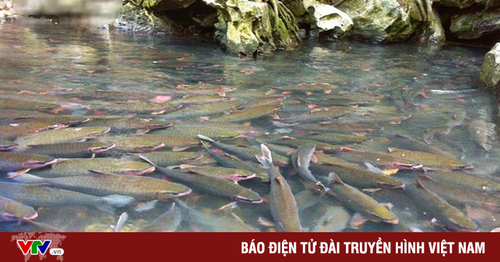 Huyền bí 'suối cá thần' nghìn con ở Thanh Hóa