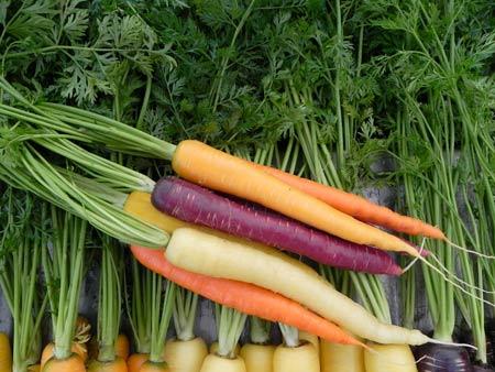 Cà rốt có nhiều màu sắc
