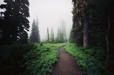 Đường mòn trên núi Rainier, bang Washington, Mỹ.