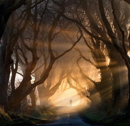 Đường mòn băng rừng lúc hoàng hôn ở Ireland.