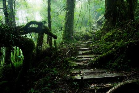Đường mòn trên núi Thái Bình - Đài Loan.