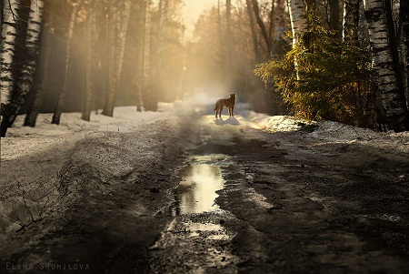 Đường mòn trong rừng ở Nga.