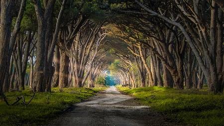 Con đường trong công viên Migliarino San Rossore ở thành phố Pisa, Ý.