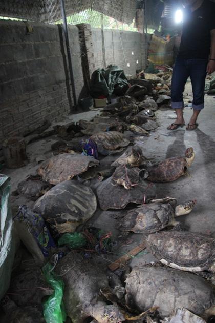 Mai rùa được tìm thấy tại kho. (Ảnh: Lao động)