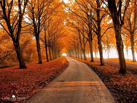 Con đường mùa thu.