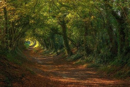 Đường mòn đi lên cối xay gió Halnaker ở hạt Sussex, Anh.