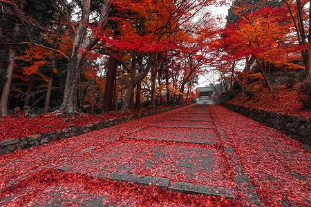 Một con đường độ thu về ở Kyoto, Nhật Bản.