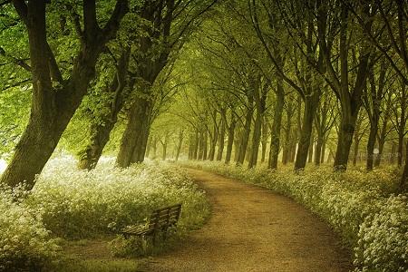Một đường mòn độ xuân về ở Hà Lan.