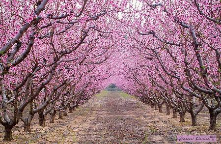 Mùa xuân trên những con đường.
