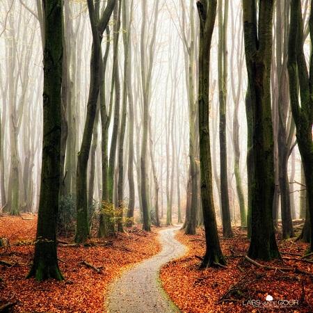 Đường mòn trong rừng vào thu.