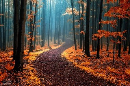 Mùa thu trên dãy White Carpathians nằm giữa biên giới hai nước Slovakia và Séc.