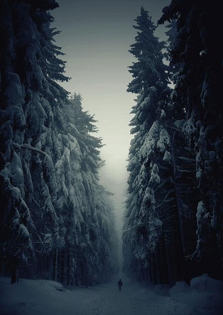 Đường mòn băng rừng trong mùa đông ở Séc.