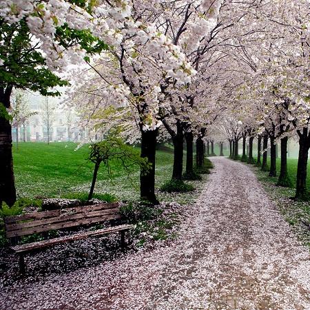 Mùa xuân ở công viên Spencer Smith, thành phố Burlington, tỉnh Ontario, Canada.