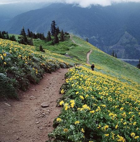 Mùa xuân ở núi Dog, bang Washington, Mỹ.
