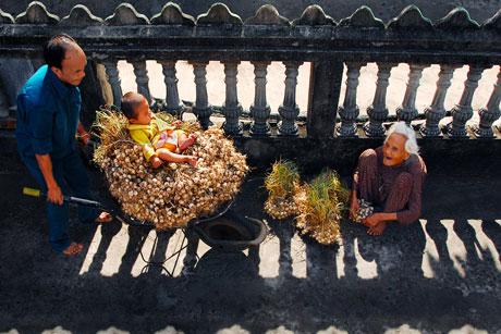 Niềm vui được mùa tỏi (đời sống) - Bùi Thái Dũng - giải 2